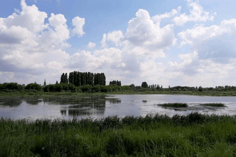 У Луцьку розчистять заплаву заради водного туризму: уже закупили човни