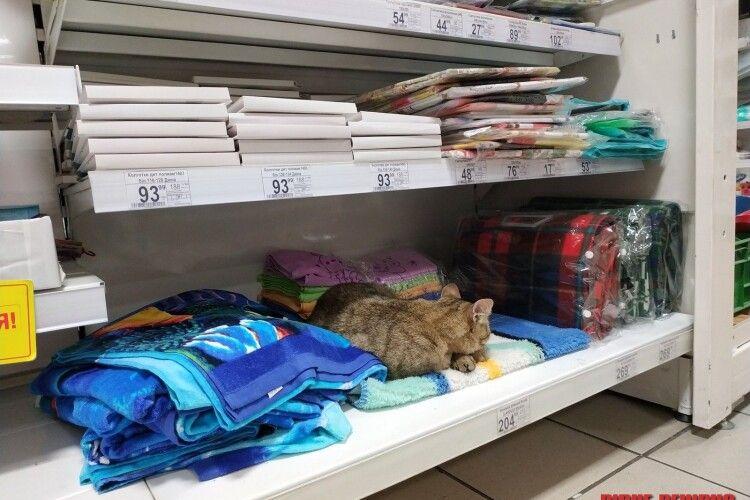 У рівненському супермаркеті просто на полиці «оселився» кіт (фото)