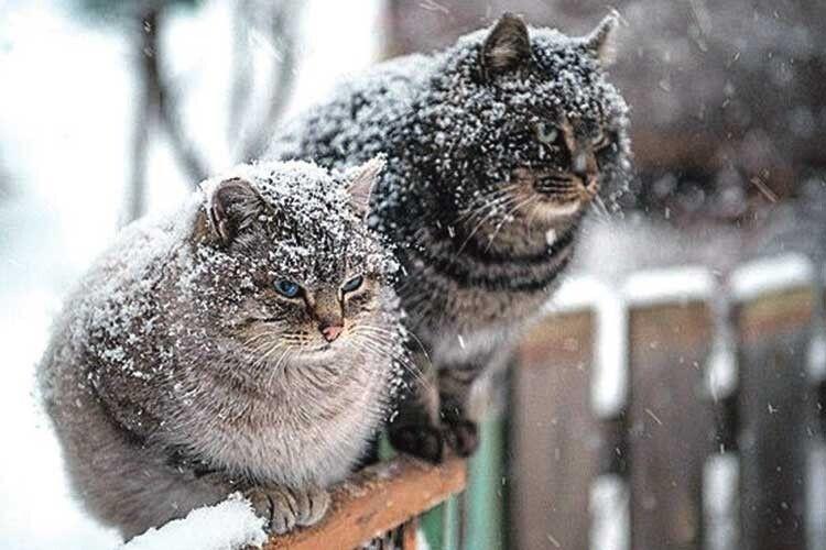 «Зима розпочнеться зіснігу»