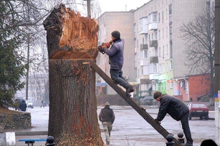 На стовбурі вікового дуба «поселять» лелек