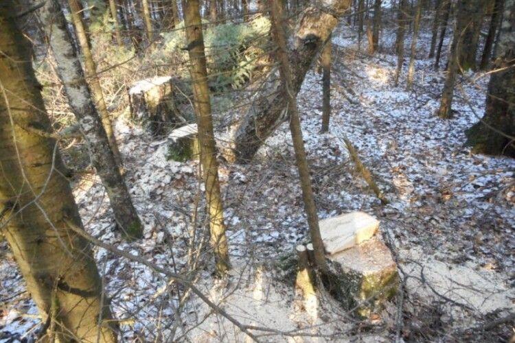 Упіймали волинянина, який на «Опелі»… викрадав деревину