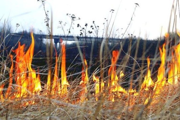 Волинські правоохоронці застерігають не палити суху рослинність