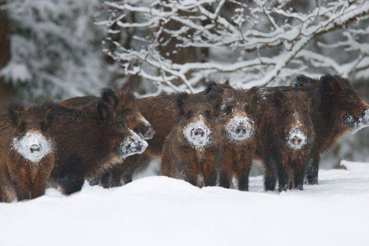 Погода на вівторок, 26 січня: Волинь накриють снігопади та хуртовини