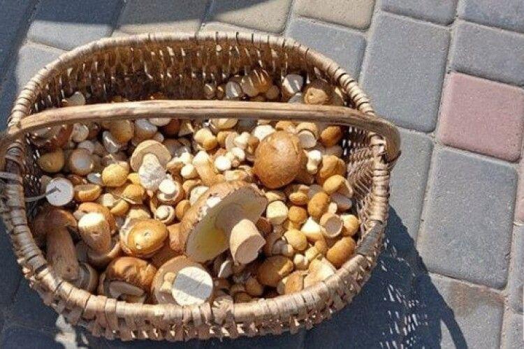 На волинських ринках побільшало грибів: почім просять за кілограм
