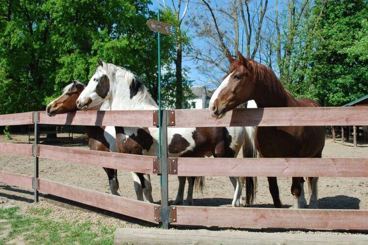 У Рівному шукають людину, яка дуже любить коней
