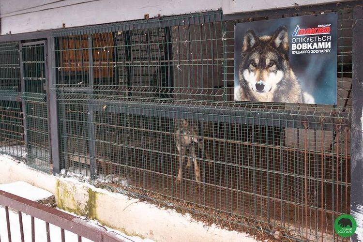 Луцькі вовки отримали спонсорів