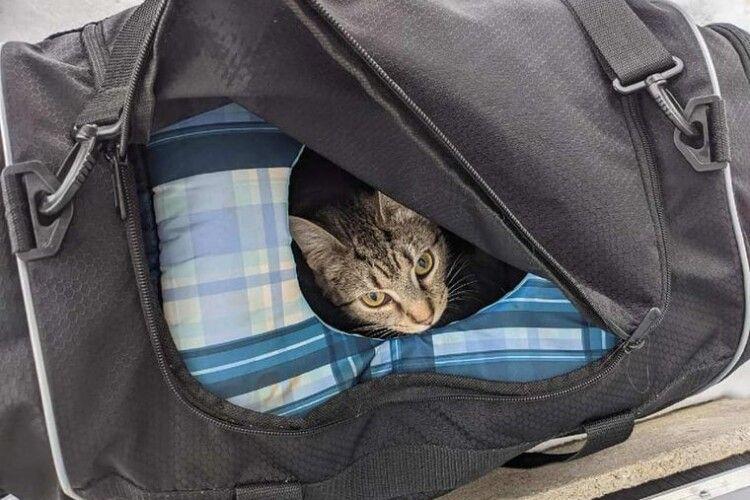 Сапери почули, що в «підозрілій сумці» щось нявкає, а там... велика сімейка (Фото)