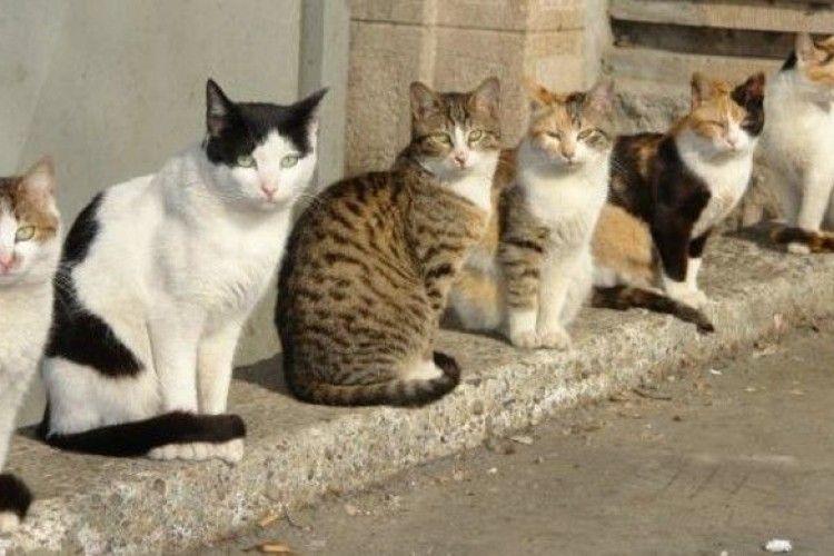 Депутати Рівненської міськради пропонують захистити права котів