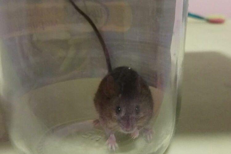 Жінка впіймала мишу... і потрапила під чар її очей