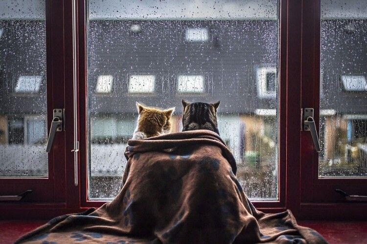 Погода на п'ятницю, 27 листопада: синоптики обіцяють дощ з мокрим снігом