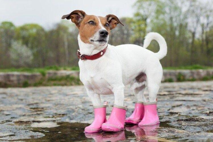 Погода на понеділок, 13 квітня: на нас чекає теплий дощовий день, але попереду різке похолодання...