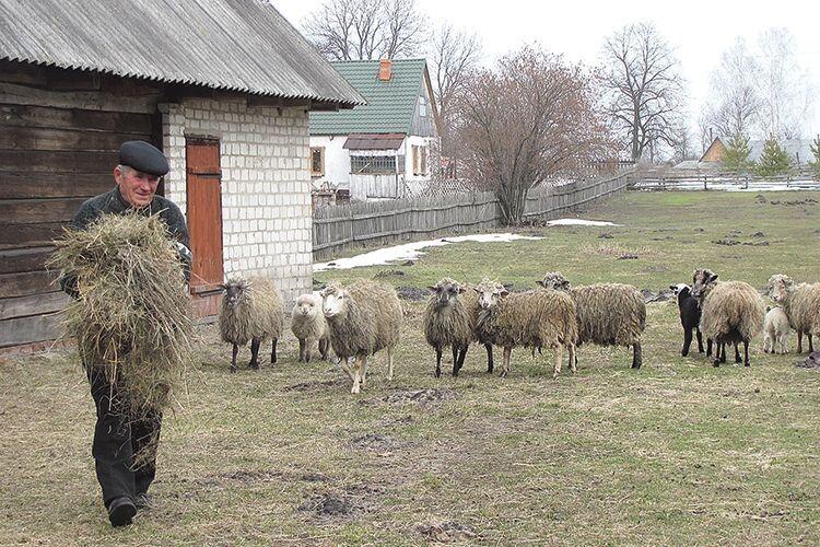 85-річний господар разом  із сім'єю обробляє до 20 гектарів поля і… не засинає без «Волині»