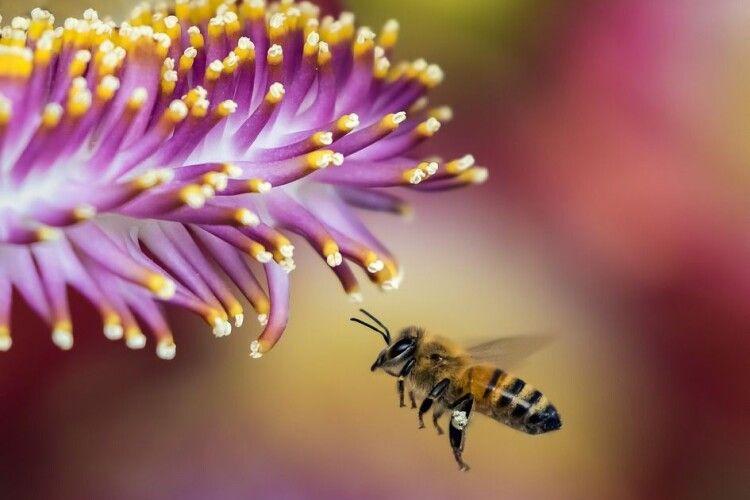 Справа у суді: швейцарських бджіл звинуватили у контрабанді пилку з Австрії
