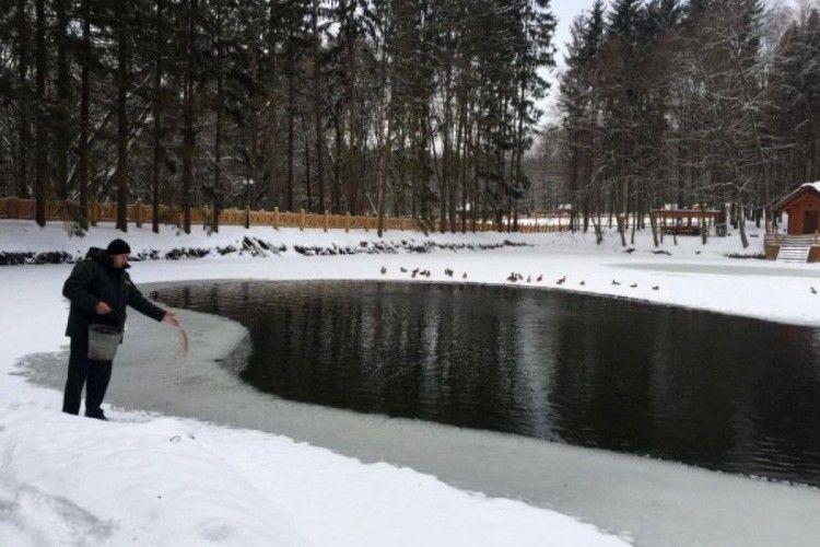 Воротневські качки вдень займаються фігурним катанням, а вночі – плаванням
