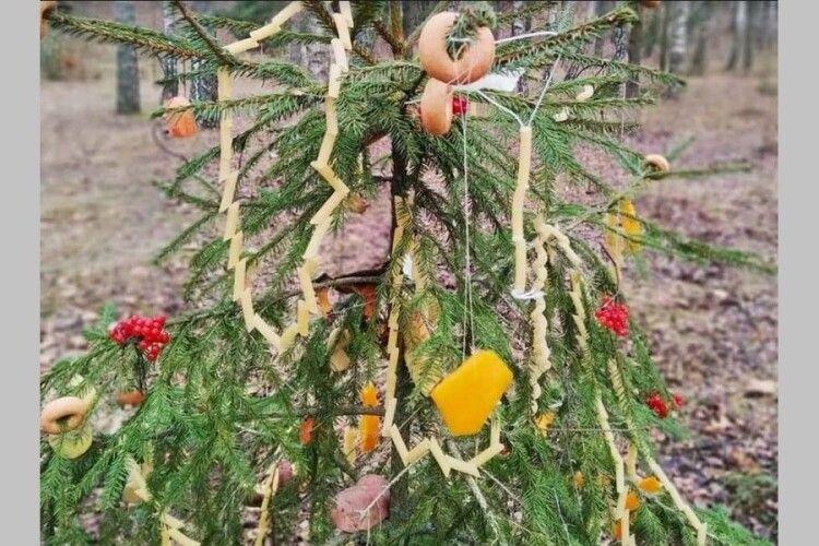На Волині ялинку прикрасили бубликами, овочами і макаронами