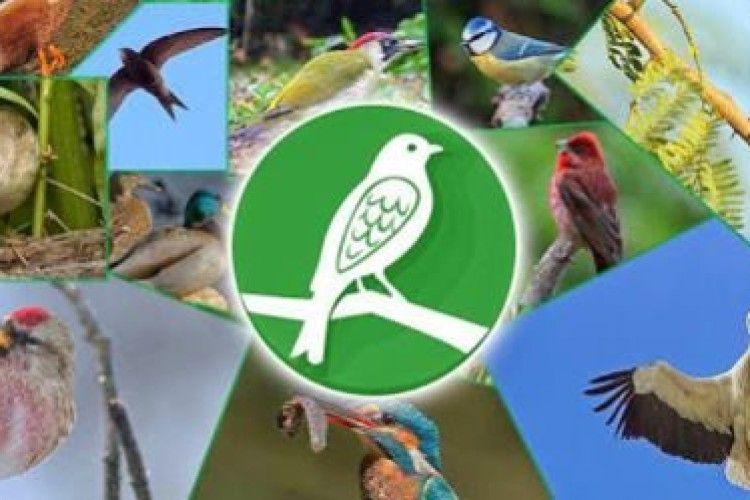 Нацпарк «Цуманська пуща» закликає волинян завантажити у свої телефони горобців, лелек, качок та соколів