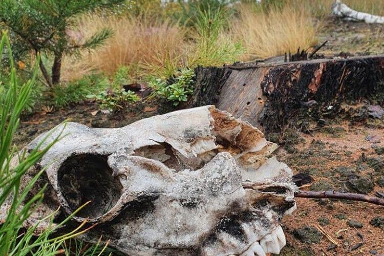 У лісі під Києвом знайшли череп невідомої істоти (Фото)