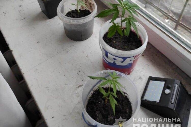 32-річна волинянка вирощувала вдома в горщиках марихуану (Фото)
