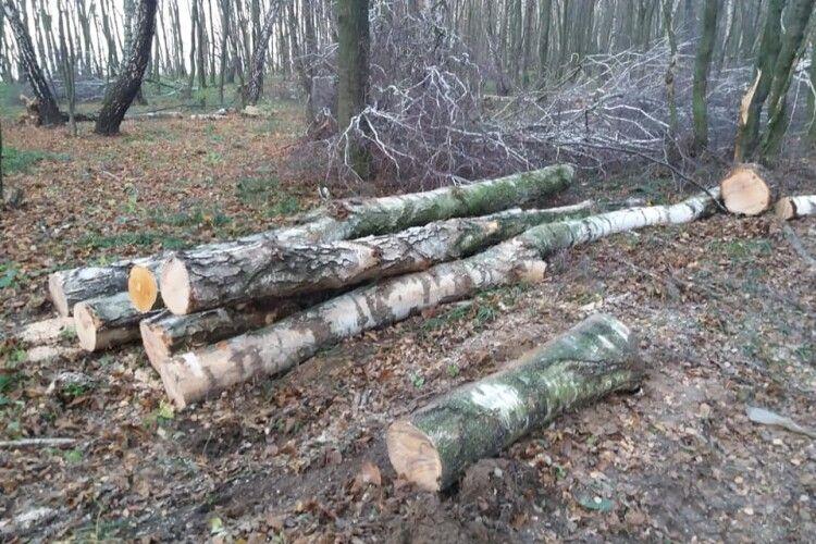 Мешканці Поромівської ОТГ Іваничівського району обурені вирубкою лісу