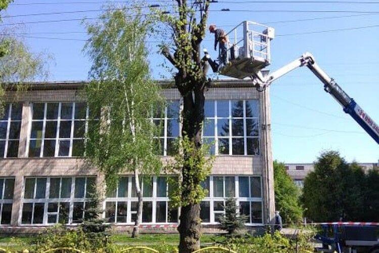 На центральному проспекті у Луцьку ріжуть липи (Фото)