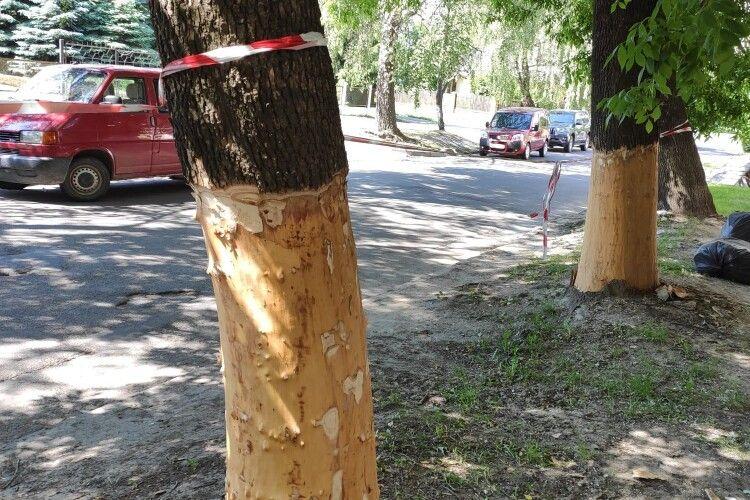 У Луцьку невідомі пошкодили дерева