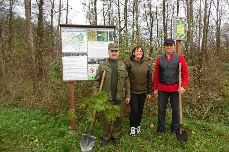 В урочищі «Панський ліс» висадили 300 саджанців липи та клена-явора (фото)