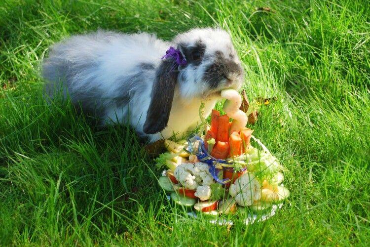 Рівненській кроличці Кроші на День народження подарували торт, більший за неї саму (Фото)