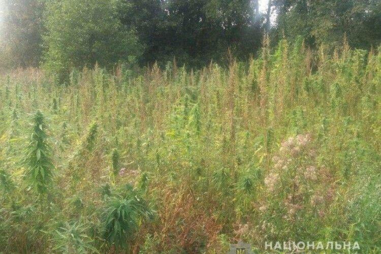 У мешканки Луцького району поліція виявила плантацію конопель