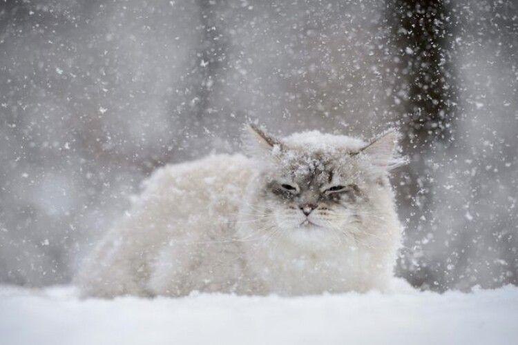 Тижні морозів і хуртовин: синоптики розповіли коли в Україну прийде потепління