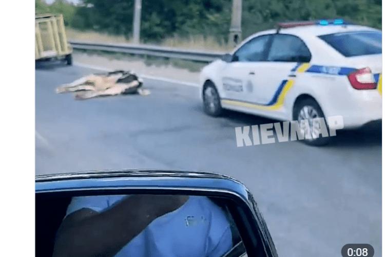 Тварини загинули: у столиці під час ДТП на дорогу випали корови (Відео 18+)