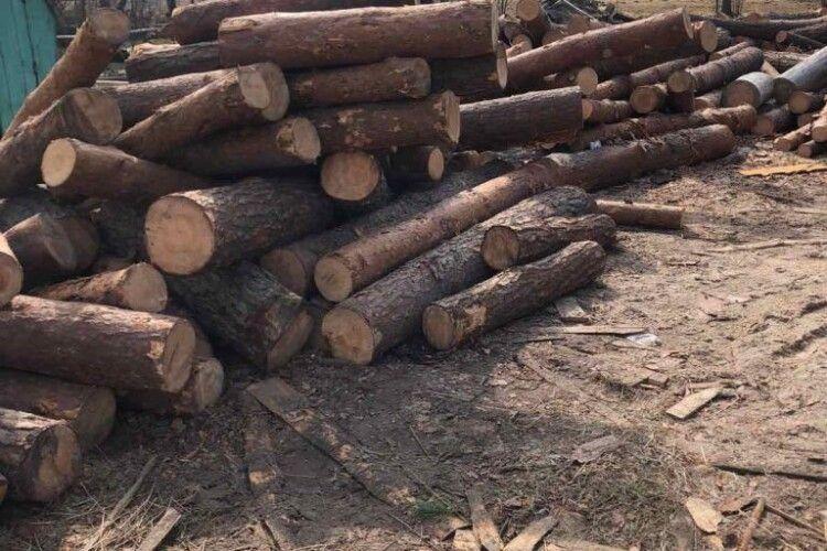 На одній із пилорам Ратнівщини виявили гори нелегальної деревини