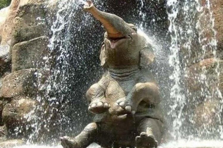 Спекотного українського літа слона Хораса рятує душ (Відео)