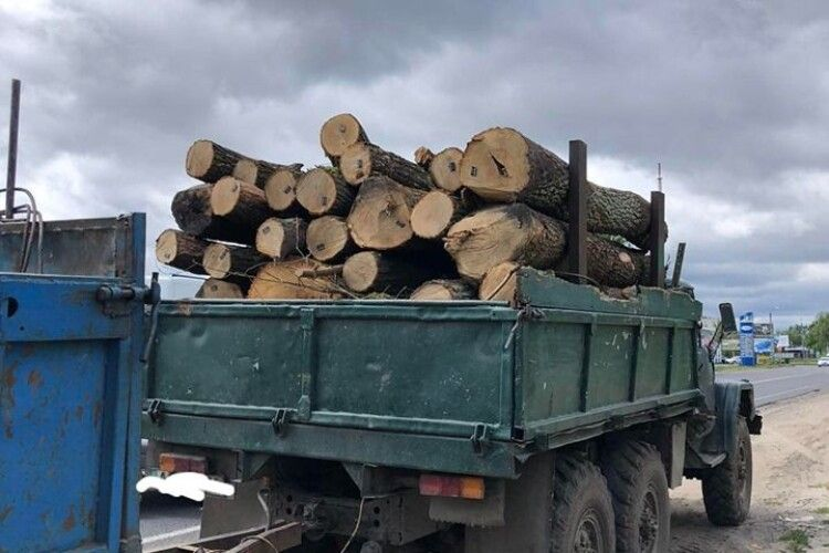 У Ковелі й на Ратнівщині вилучили крадену деревину (Фото)