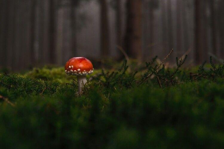 Чоловік поїв грибів і... потрапив до реанімації