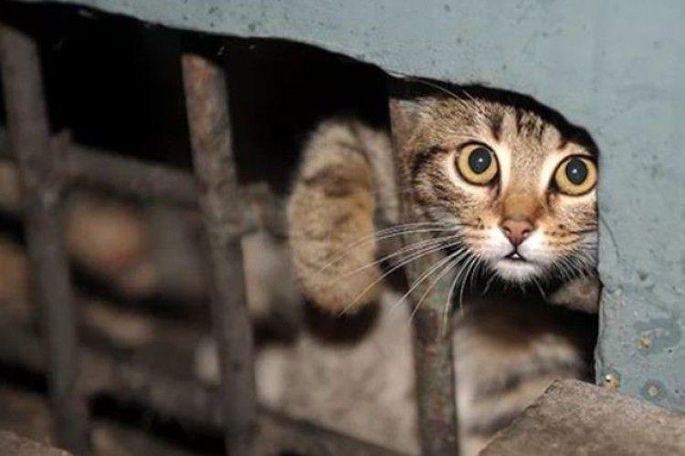 Як захистити безпритульних котів від жорстокого поводження (Відео)
