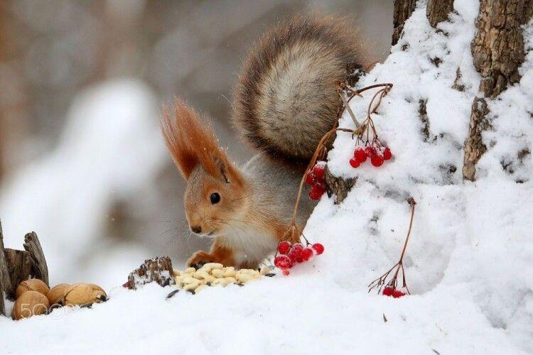 Погода на середу, 5 лютого: налетить трохи білих мух, а головним синоптиком буде білочка