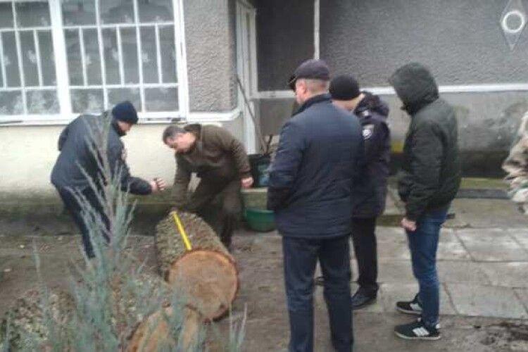 Крадені дуби знайшли у приватному дворі в Цумані