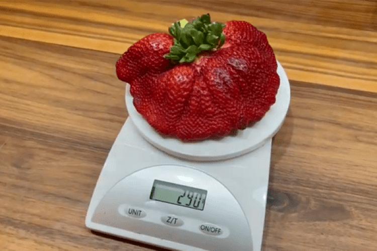 Найбільша в світі суниця заважила 290 грамів
