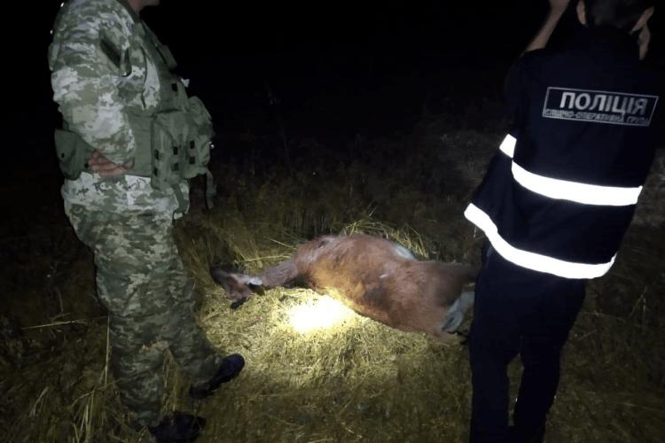 На Волині браконьєри жорстоко розстріляли оленя (Фото)