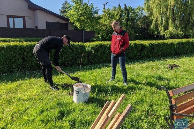 У Володимирі-Волинському хлопець, який понищив дерева, посадив нові