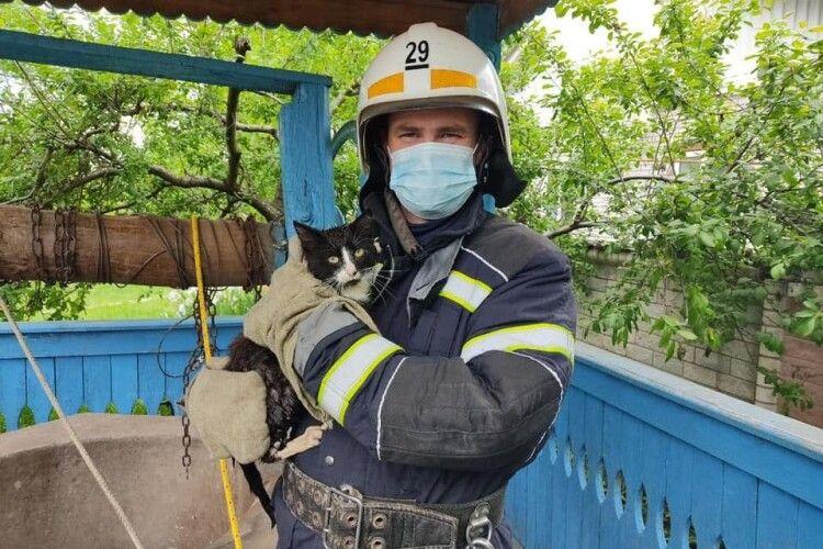 Бійці ДСНС врятували кота, який шубовснув у 20-метрову криницю (Фото)
