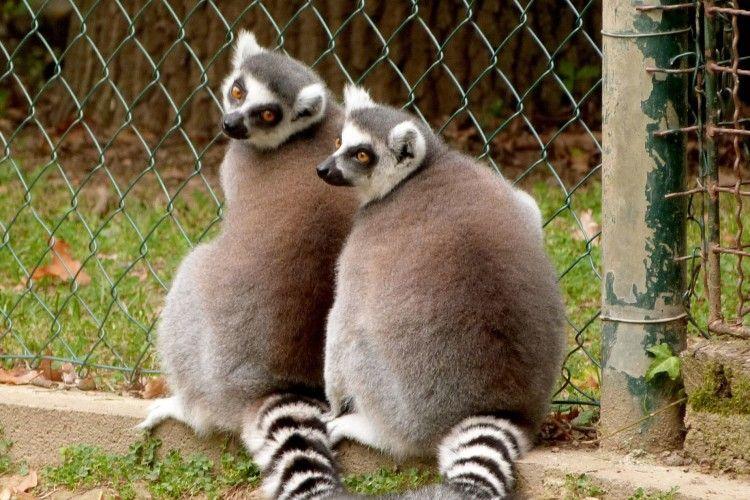 Рівненський зоопарк зробив подарунок для Валентинів і Валентин