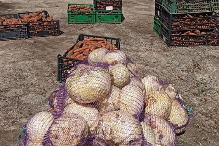Мешканці Рівненського зоопарку одержали бомбезний морквяно-капустяний презент (Фото)