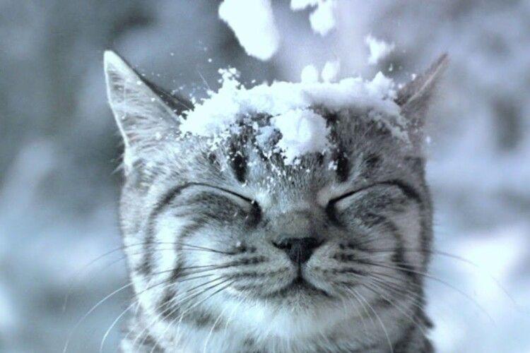 Снігопад застав лучан... у маршрутці (Відео)