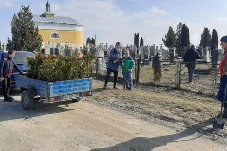 У селі на Турійщині висадили понад 100 туй