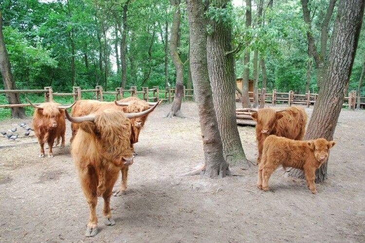 Рівненський зоопарк шукає робітників у відділ копитних тварин