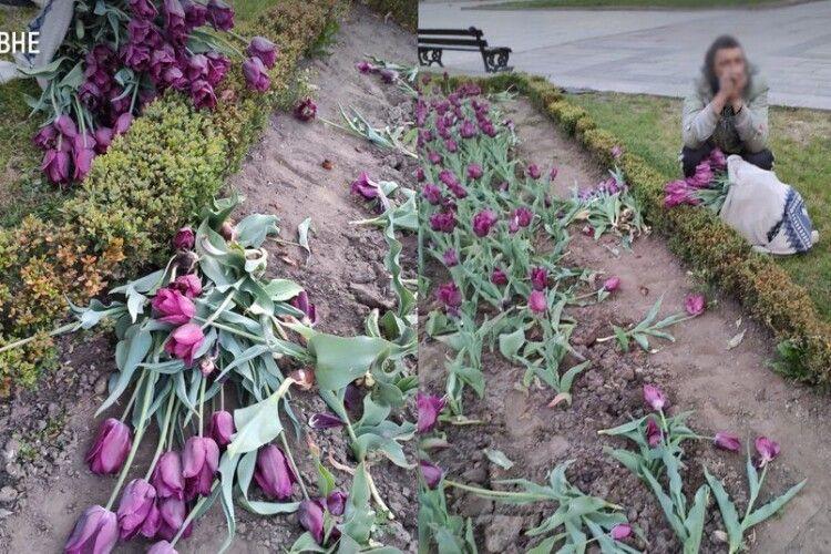 У Рівному поліція знову впіймала чоловіка, який на міській клумбі рвав тюльпани на продаж