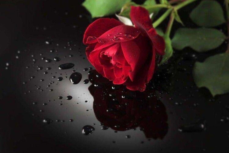 Історія для душі: Червона троянда