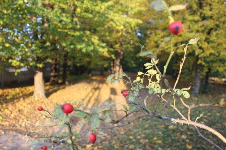 У Любешівському парку – осінь (Фото)