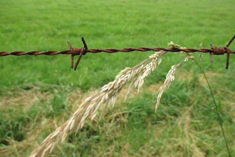 Депутат сільради повернув громаді земельну ділянку, виділену йому незаконно
